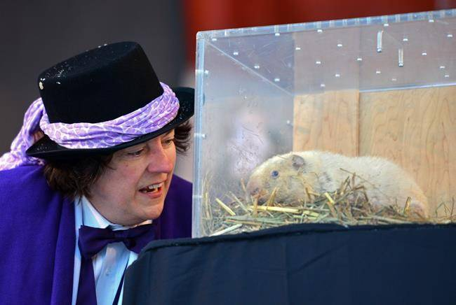Wiarton Willie at the Groundhog Day festivities in Wiarton. Image Source